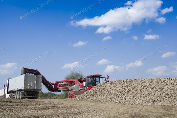 vehicle harvesting sugar beets