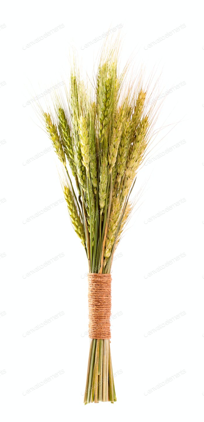 Sheaf of cereals