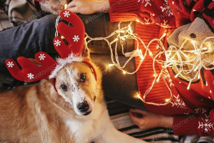 Cute dog with reindeer antlers