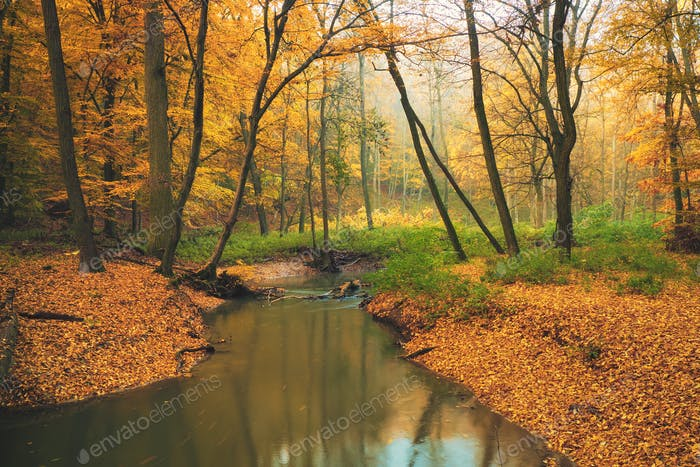 Flowing stream on colorful autumn forest
