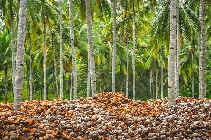 Pile of empty coconut shells under tall palmtrees