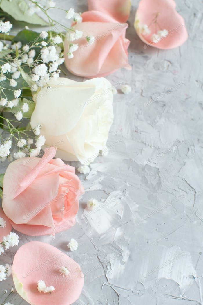 Pink and cream roses close up on a grey background