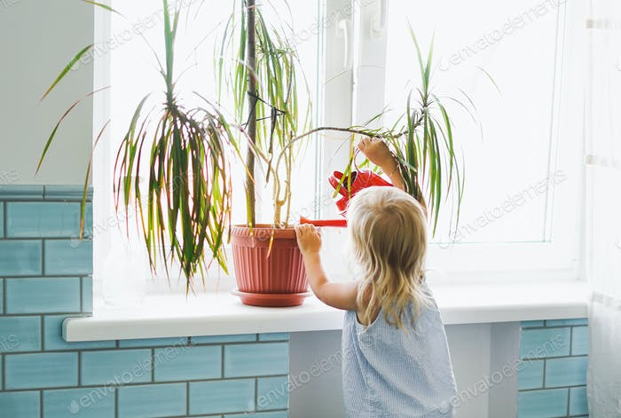 Funny cute baby girl watering house plant at room in bright interior home