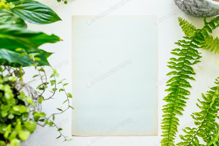 Blank paper and plants