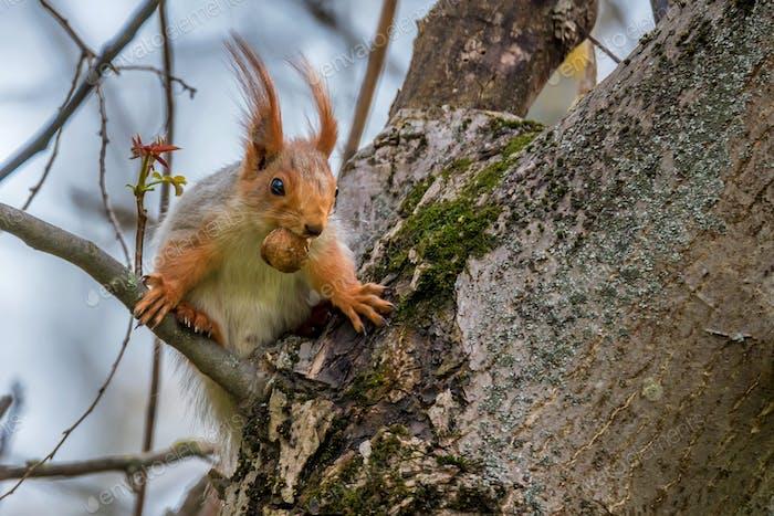 Beautiful wild squirrel